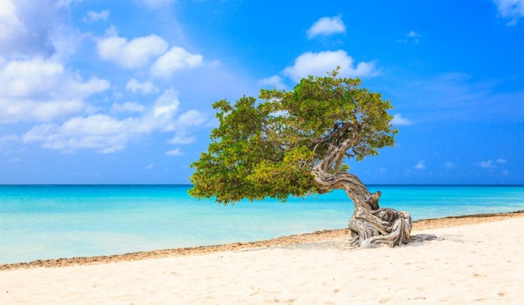 Top Things to Do in Aruba on a Cruise