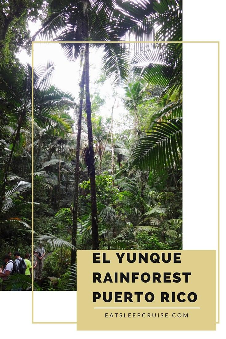 El Yunque Rainforest Pinterest