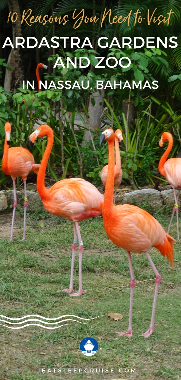 10 Reasons You Need to Visit Ardastra Gardens and Zoo in Nassau, Bahamas