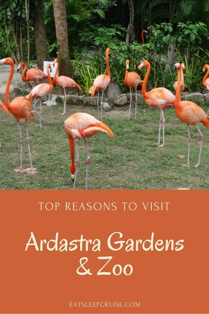 Ardastra Gardens and Zoo