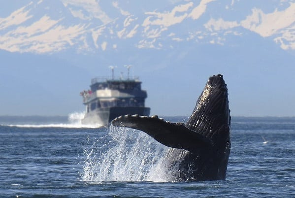 Ten Reasons to Go on an Alaskan Cruise