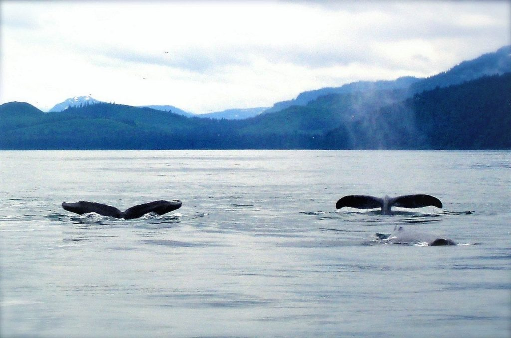 Photos that Will Inspire You to Take an Alaskan Cruise