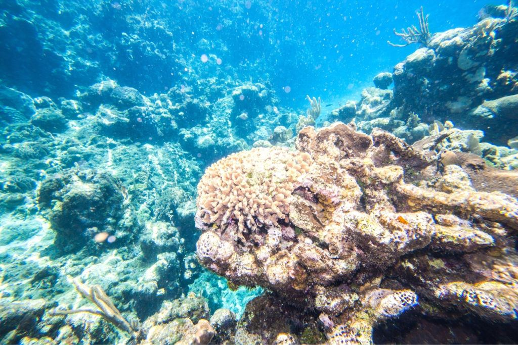 snorkel in Roatan