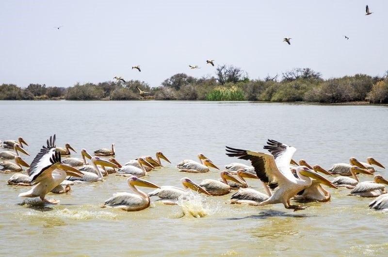 7 Epic Safari Cruise Destinations in Africa