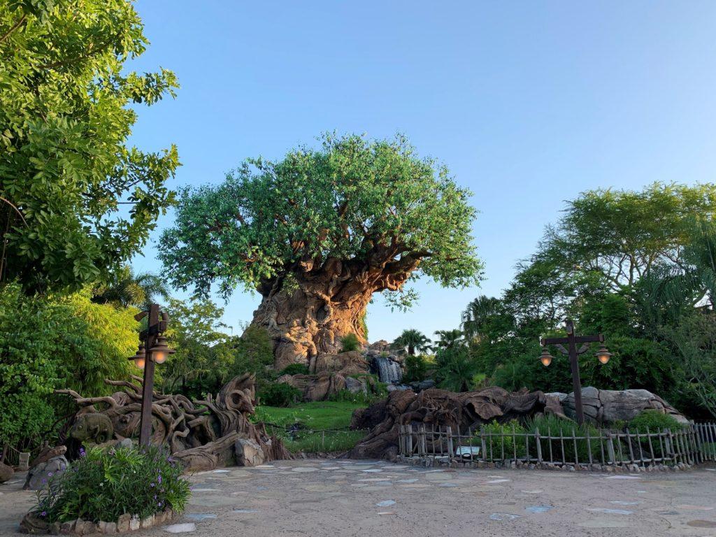 Visiting Walt Disney World  in 2021